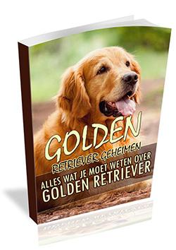 Golden Retriever geheimen Review